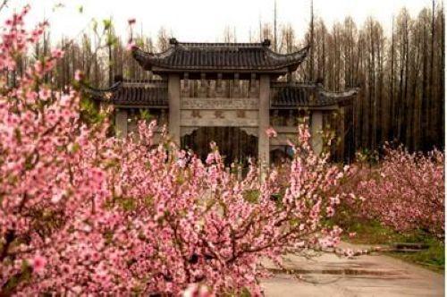 至桃花争春给力绽放 2011上海桃花节赏花攻略